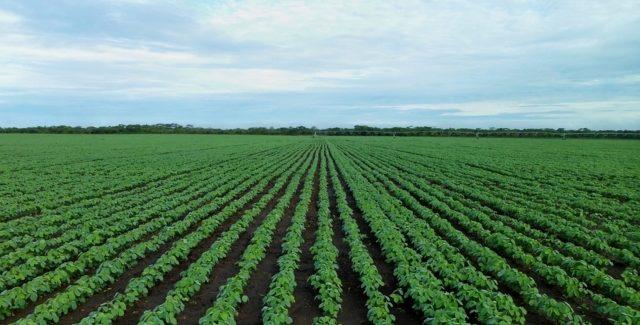 PGR opina pela inconstitucionalidade de MP que alterou prazo para Cadastro Ambiental Rural (CAR)