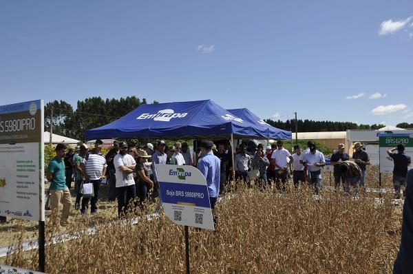 Embrapa e Fundação Cerrados lançam cultivares de soja para o Brasil Central