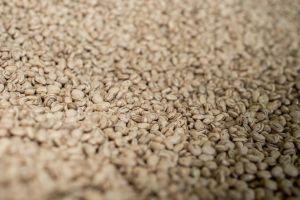 Levantamento aponta mudanças do cultivo de feijão nos estados