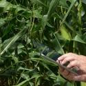 Artigo: A Tecnologia na Agricultura – desafios e soluções